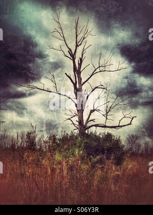 A bare tree against an ominous sky. - Stock Photo