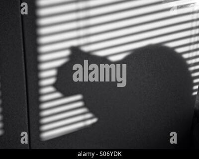 Shadow of car behind Venetian blinds - Stock Photo