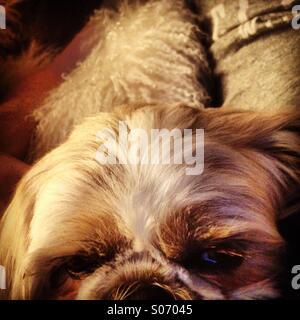 Dog day - Stock Photo