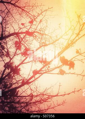 Autumn leaves on tree branches - Stock Photo