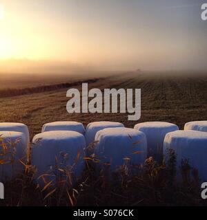 Wrapped hay bales in morning autumn mist in the Finnish Baltic Archipelago island of Åland - Stock Photo