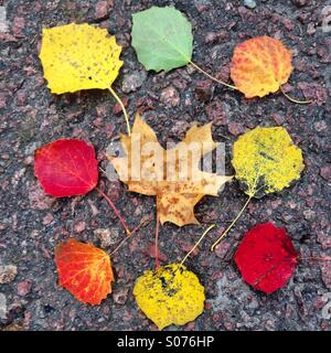 Different coloured autumn leaves arranged on a pavement - Stock Photo