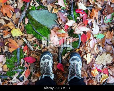 Looking down in autumn while hiking with fall foliage, moss and roots underfoot in New Jersey, USA - Stock Photo