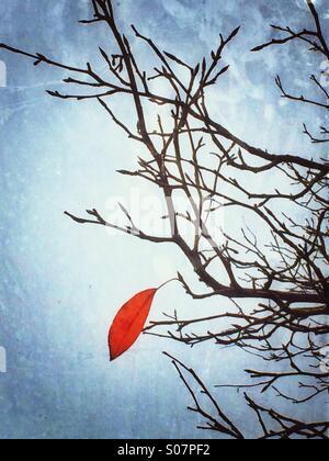 The last leaf - Stock Photo
