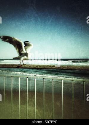 A seagull ready to take off - Stock Photo