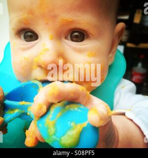 Baby boy nearly 6 months old clutches weaning spoon as he attempts to eat puréed squash - Stock Photo