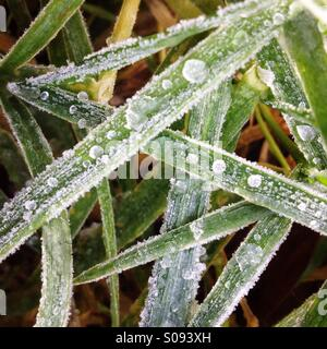Close-up of ice on blades of grass - Stock Photo