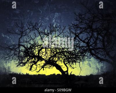 Bare twisted branches of fig tree against evening sky - Stock Photo
