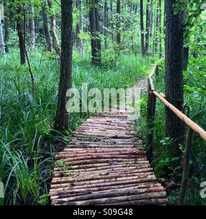 A wooden pathway made of logs, leading through a marshy forest, in the Summer, in North Germany. - Stock Photo