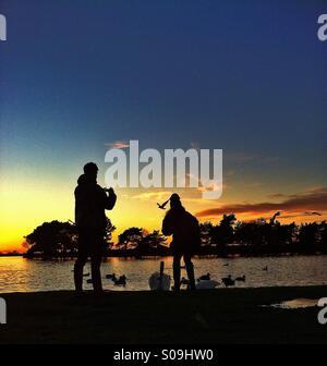 Couple feeding swans and ducks at sunset - Stock Photo