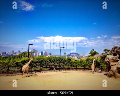 View of Sydney from the giraffe enclosure at Taronga zoo - Stock Photo