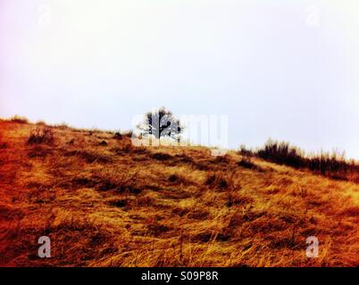 Tree on hillside - Stock Photo