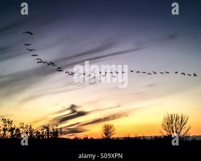 Birds flying into the sunset. - Stock Photo