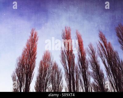 Arty tree patterns. - Stock Photo