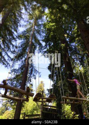 A ten year old girl does a challenge course in California redwood trees. Santa Cruz County, California, USA - Stock Photo