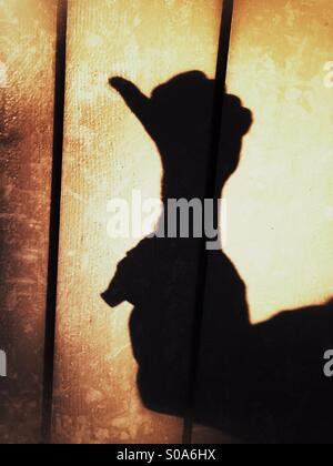 A man casting a shadow on a wall, counting on his hand. Number one. - Stock Photo