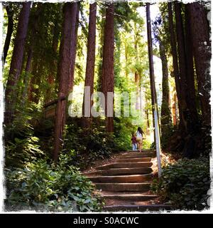 A ten year old girl and her six year old brother walk up stairs on a path in California's Redwoods. Santa Cruz County, - Stock Photo
