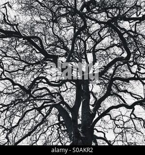 Tree branches - Stock Photo