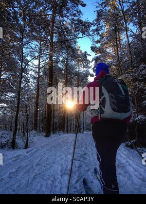 Nordic skier going cross country skiing in a forrest. - Stock Photo