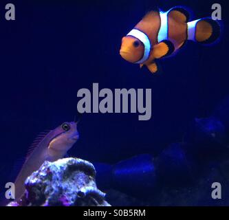 Nano Reef Tank - Stock Photo