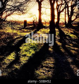 First light casts long shadows. - Stock Photo