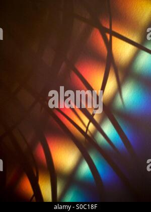 Rainbow effect on wall, from late afternoon light, with houseplant silhouette. - Stock Photo