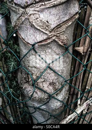 Tree growing into wire fence. - Stock Photo