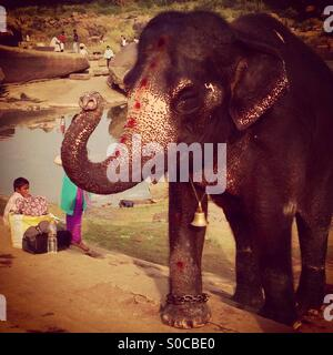 Lakshmi the elephant - Stock Photo