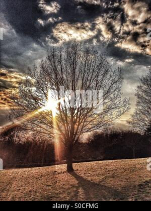 Winter tree in the early morning sunshine - Stock Photo