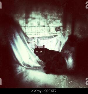 Black alley cat with beautiful green eyes, sitting on covered motorcycle. Grunge texture overlay resembling broken - Stock Photo