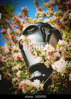 Lamppost and Cherry blossoms in Central Park ,NYC - Stock Photo