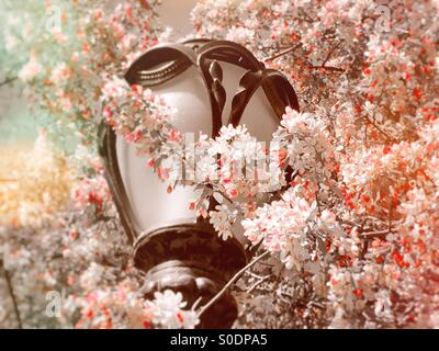 Lamppost and Cherry Blossoms in Central Park, NYC - Stock Photo