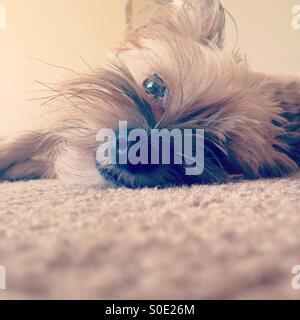 Lazy Sundays - Stock Photo