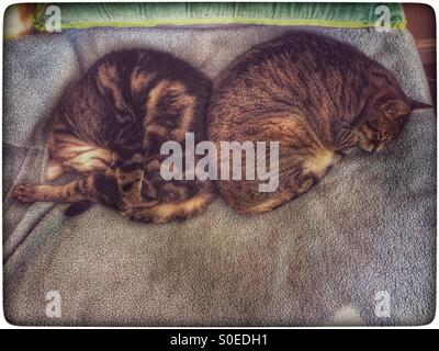 Two sleeping cats on bed. - Stock Photo