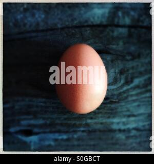 One Brown Egg - Stock Photo