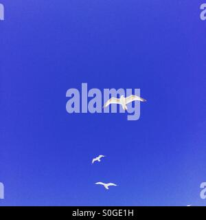 Three seagulls flying against a bright blue sky - Stock Photo