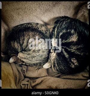 Two cats sleeping on bed. - Stock Photo