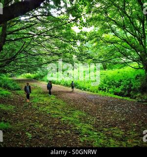 Three people walking in the woods in Malvern Hills - Stock Photo