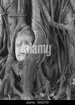 Stone Buddha head entwined in tree roots, Wat Mahathat, Ayutthaya, Thailand. - Stock Photo