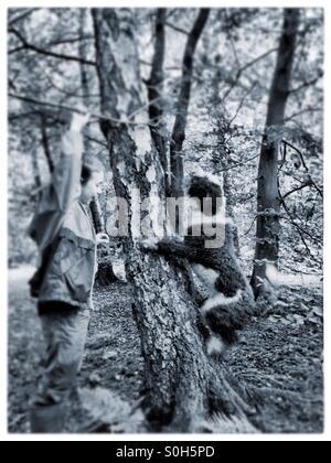 Spanish water dog climbing tree - Stock Photo