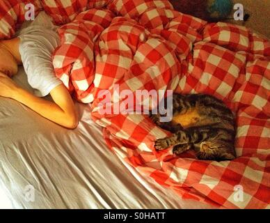 A cat and a boy sleeping on a bed - Stock Photo