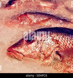 Red snapper on ice. - Stock Photo