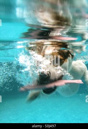 Jack Russell Terrier dog diving under water in swimming pool to retrieve toy fish. - Stock Photo