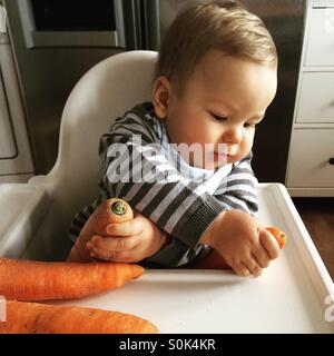 Baby boy sitting in his white high chair, having his hands crossed, holding, exploring two fresh not peeled carrots. - Stock Photo
