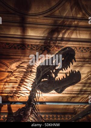 Dinosaur, at the Natural History Museum in London - Stock Photo