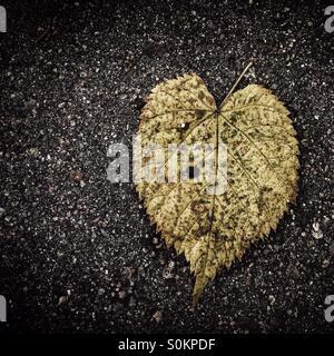 Heart shape leaf on asphalt - Stock Photo