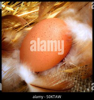 Freshly laid chicken egg on a bed of straw and hessian, with feathers. - Stock Photo