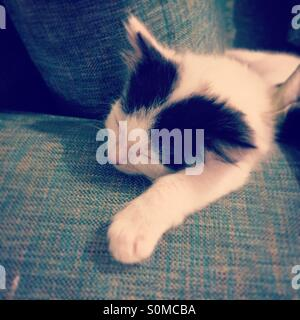 Sleeping black and white kitten. - Stock Photo