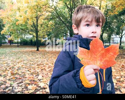 Young boy holding red colored leaf in fall - Stock Photo