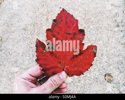 Holding a red leaf in the fall - Stock Photo